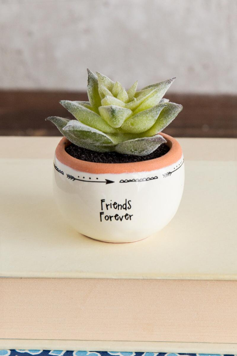 Friends Forever Succulent-  pink-cl